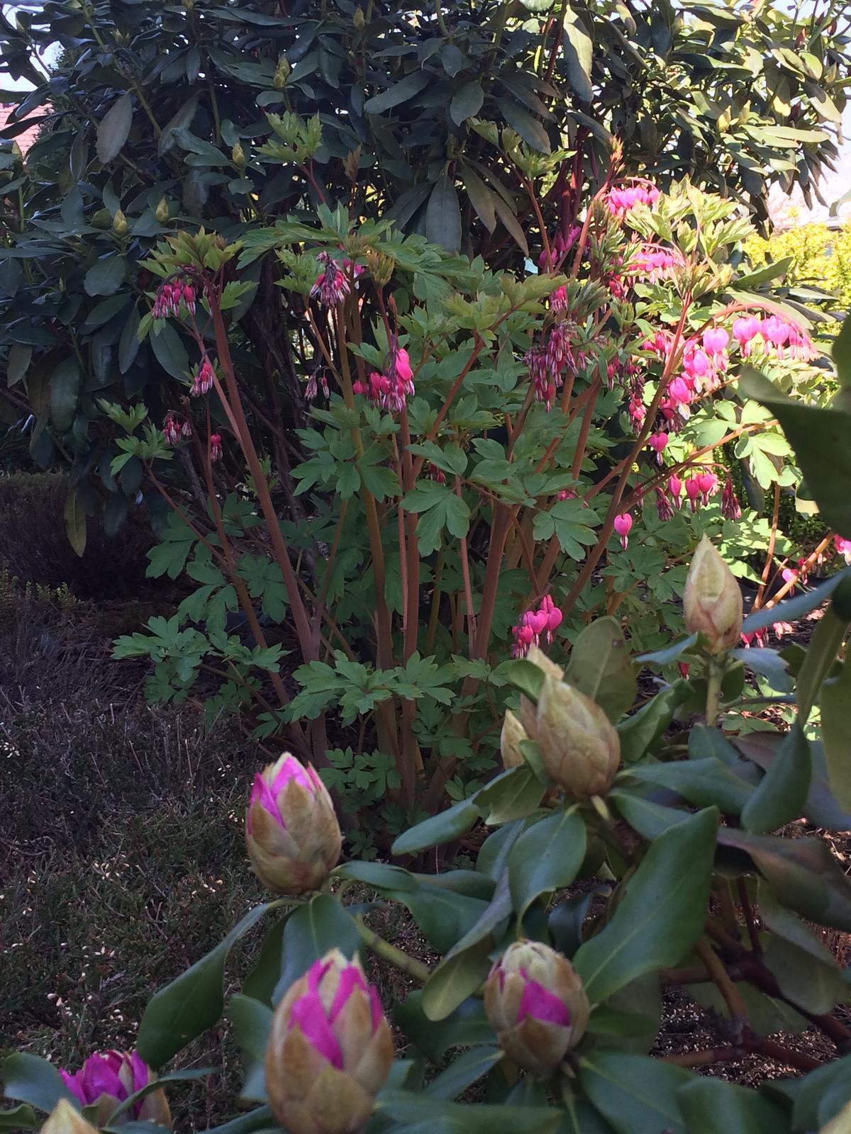 Dům i Zahrada 2019 - Obrázek č. 136