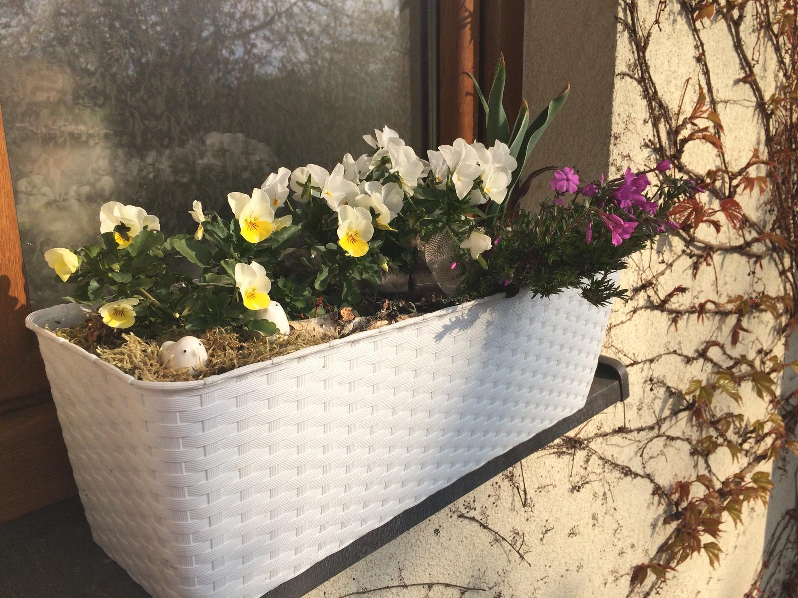 Dům i Zahrada 2019 - Rozkvetly žluté violky a floxy v truhlíku