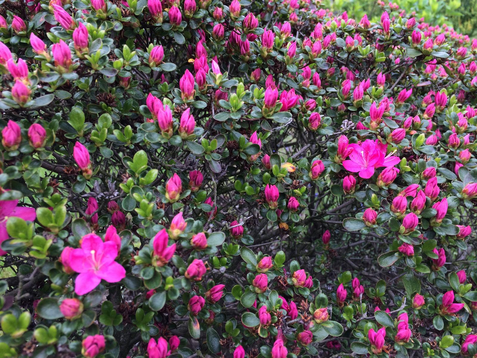 Dům i Zahrada 2019 - první kvítky
