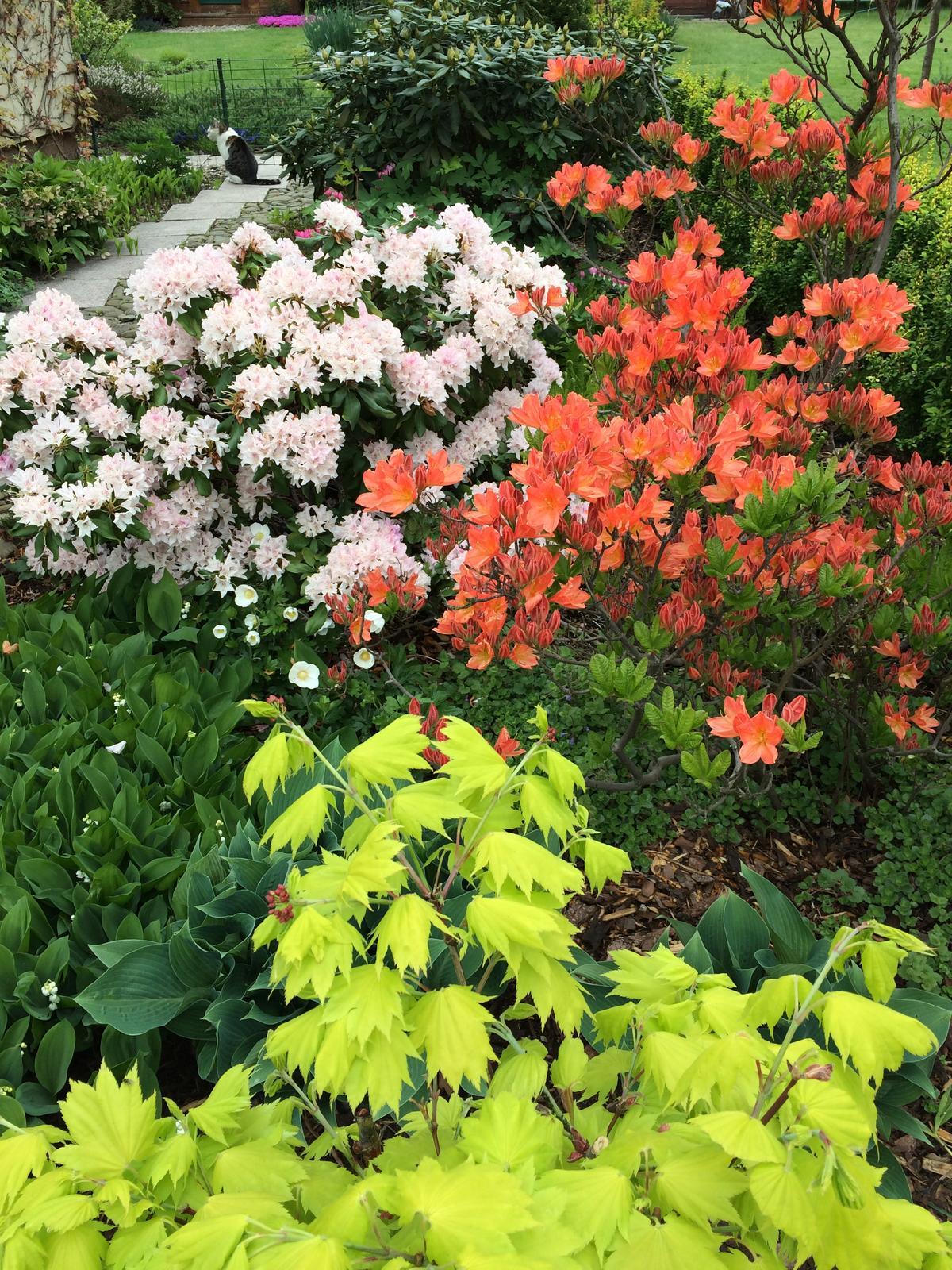 Dům i Zahrada 2019 - Obrázek č. 181