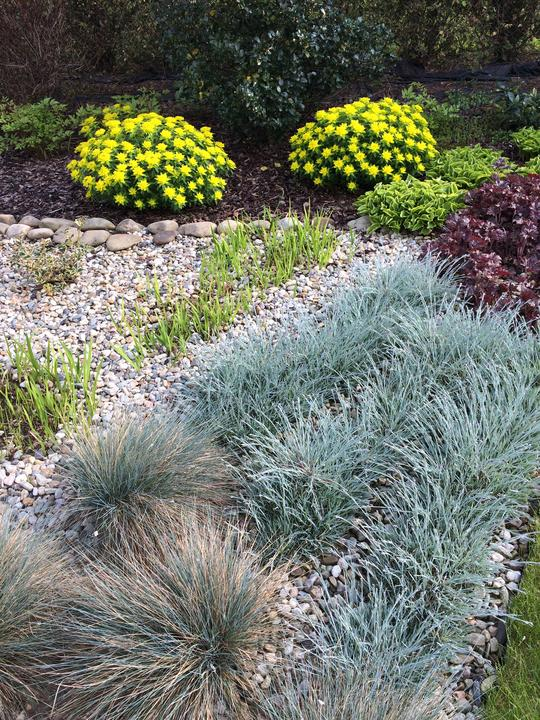 Pryšce mají krásnou čerstvou žlutozelenou, vpředu jsou stříbrné trávy a karafiátky