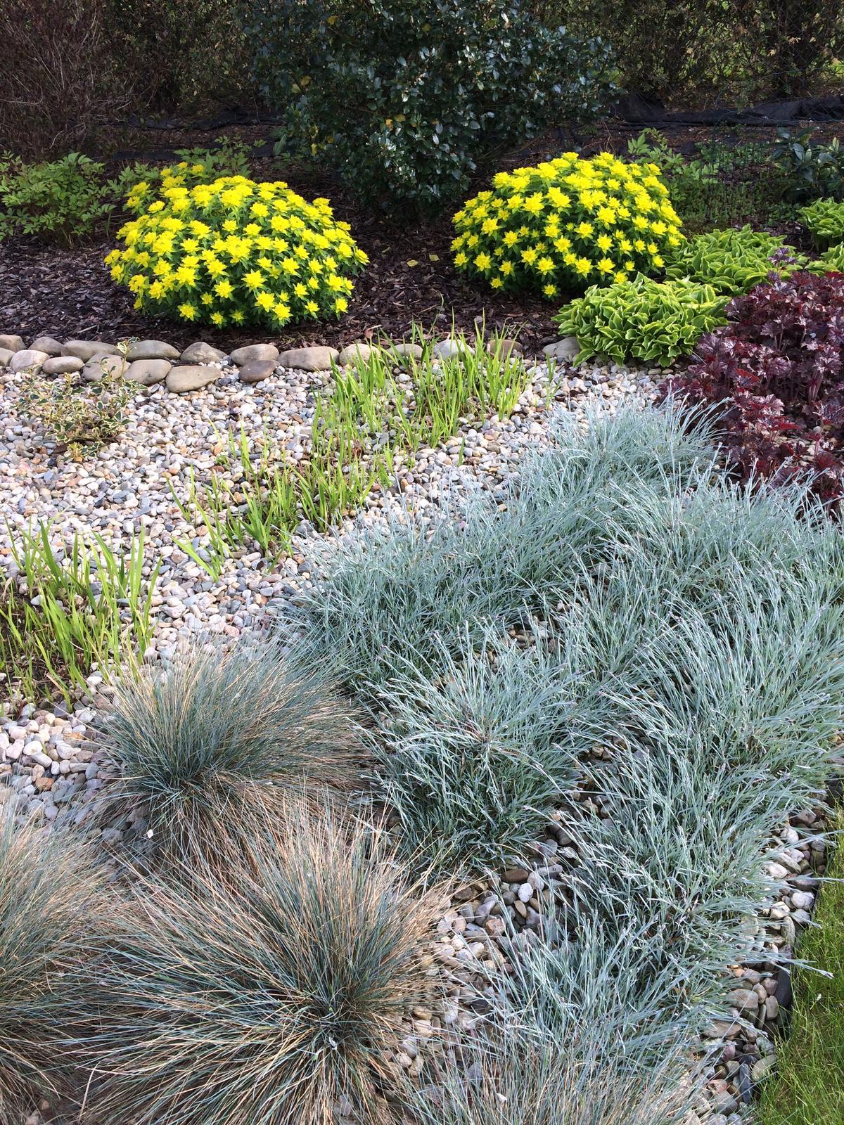 Dům i Zahrada 2019 - Pryšce mají krásnou čerstvou žlutozelenou, vpředu jsou stříbrné trávy a karafiátky