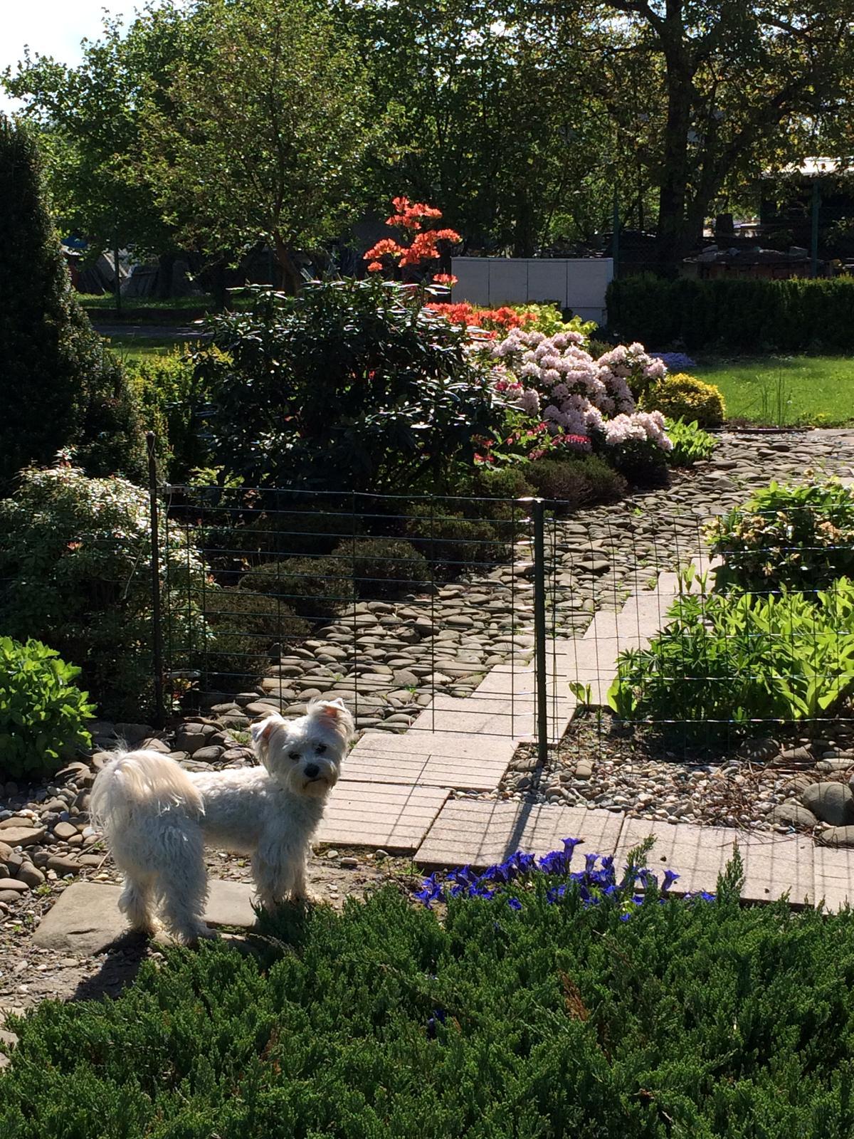 Dům i Zahrada 2019 - Obrázek č. 191