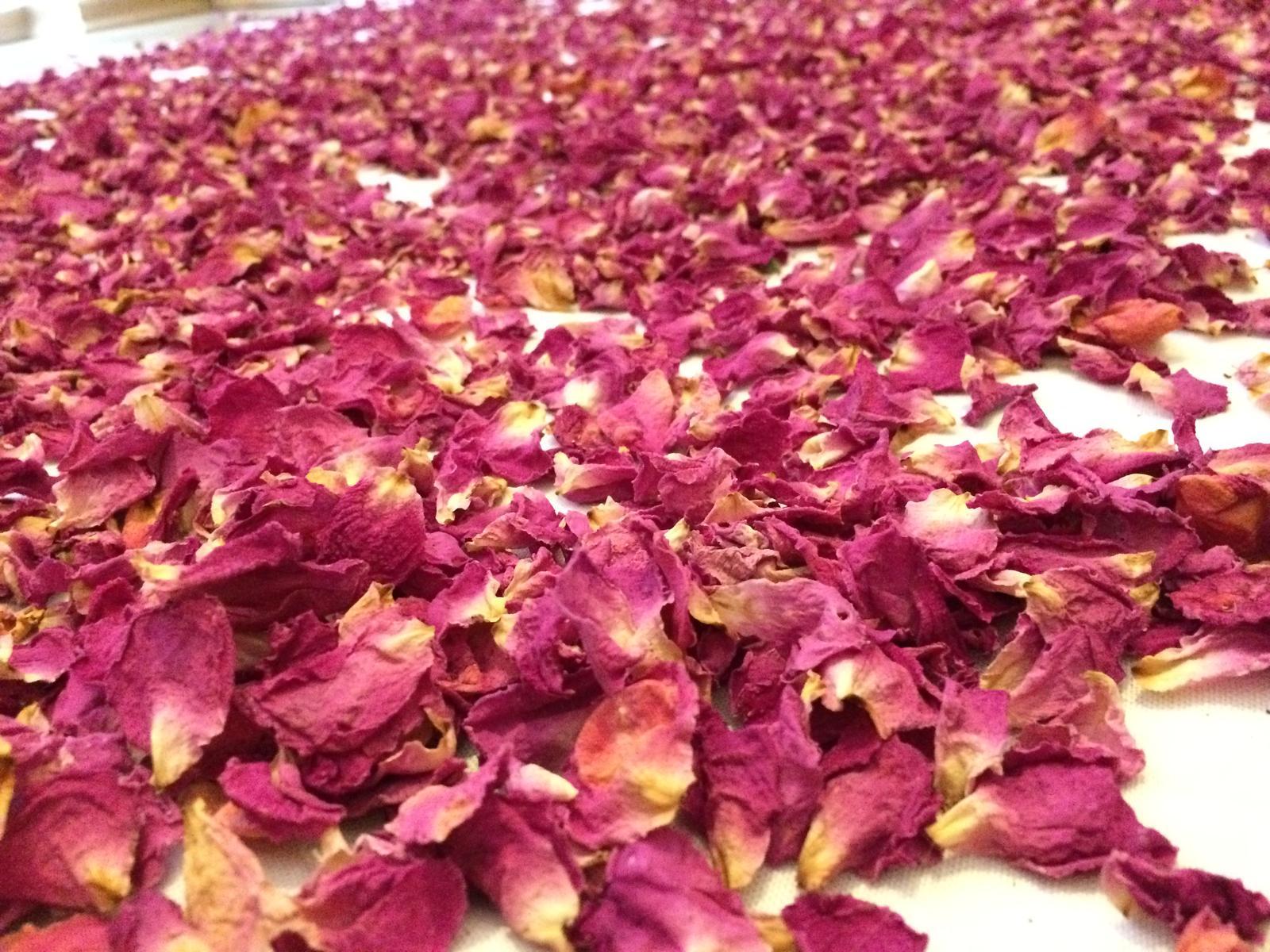 Dekorace z květin Pro radost - Okvětní lístky ze Zephirinové růže .... máte někdo osvědčený recept jak využít ? Přemýšlím nad potpouri