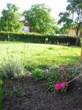 19.června vzadu v rohu zahrady švestka po průklestu