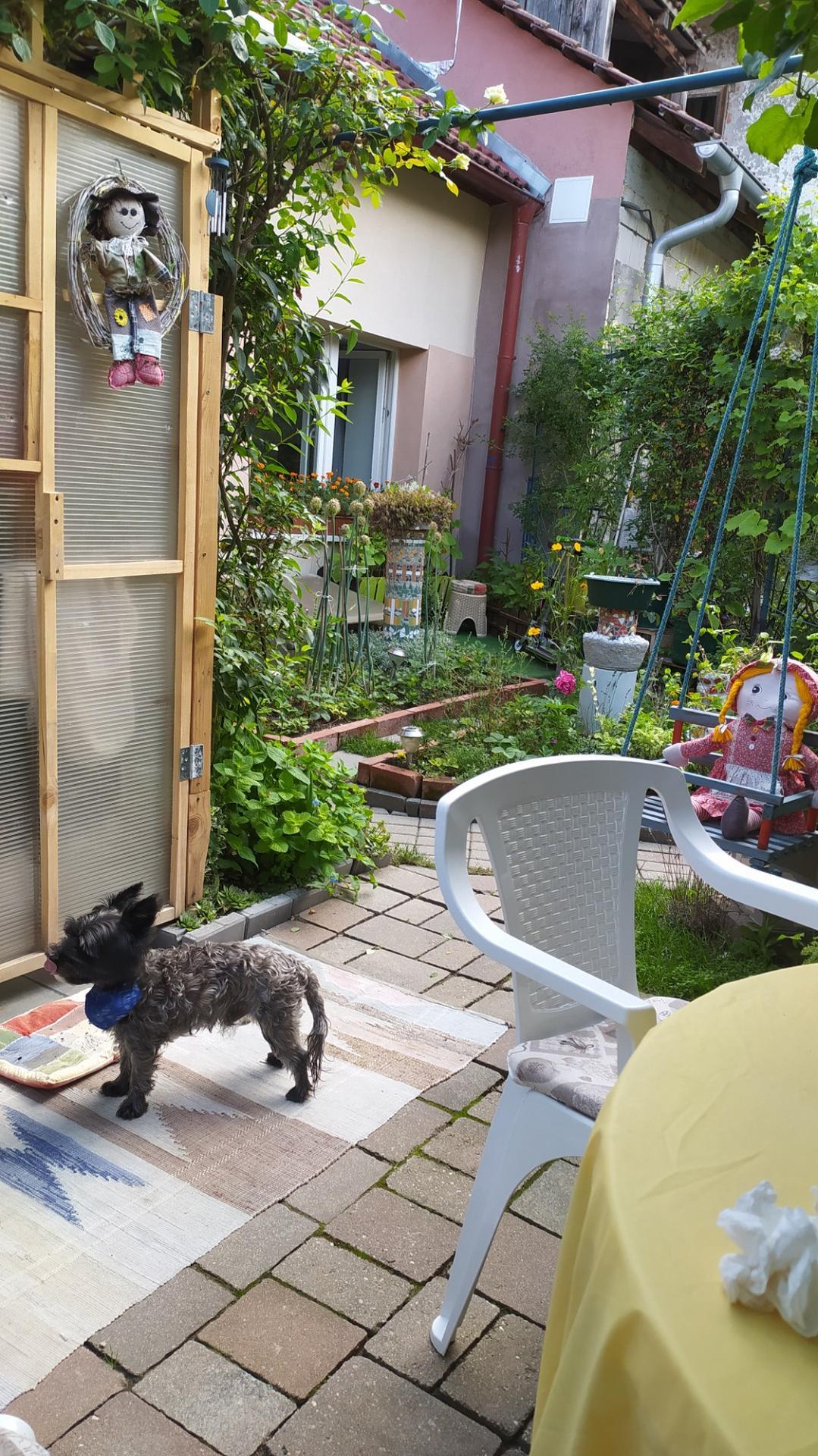 Moja záhradka,moja radosť,relax. - Obrázok č. 5