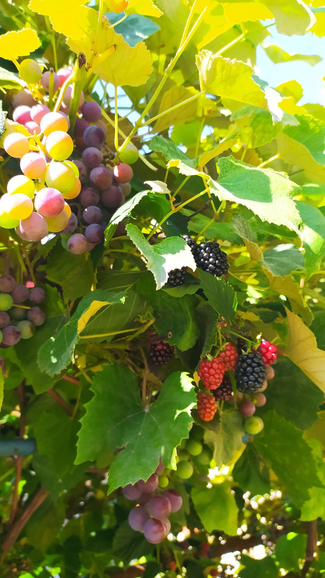 Moja záhradka,moja radosť,relax. - Obrázok č. 3