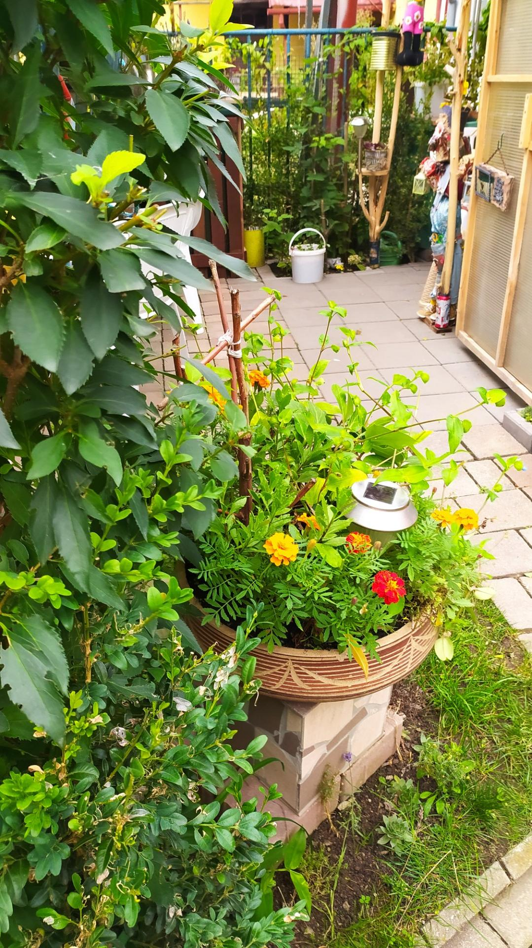 Moja záhradka,moja radosť,relax. - Obrázok č. 8