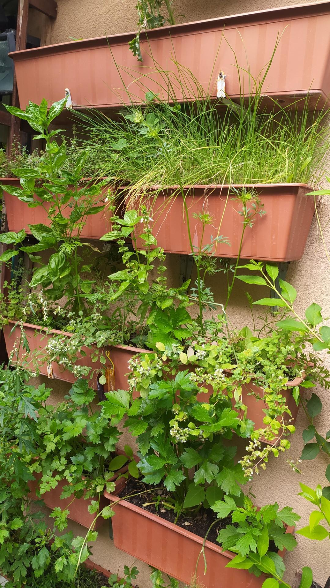 Moja záhradka,moja radosť,relax. - Obrázok č. 9