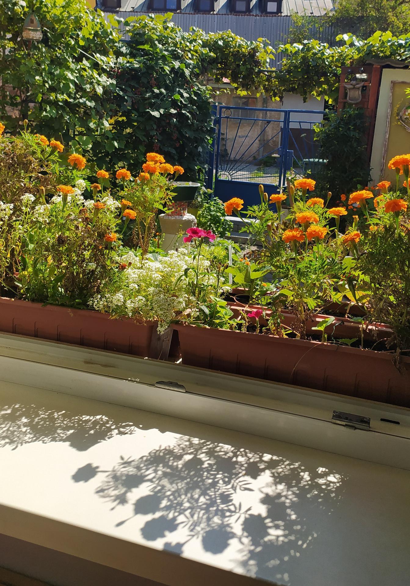 Moja záhradka,moja radosť,relax. - Obrázok č. 7