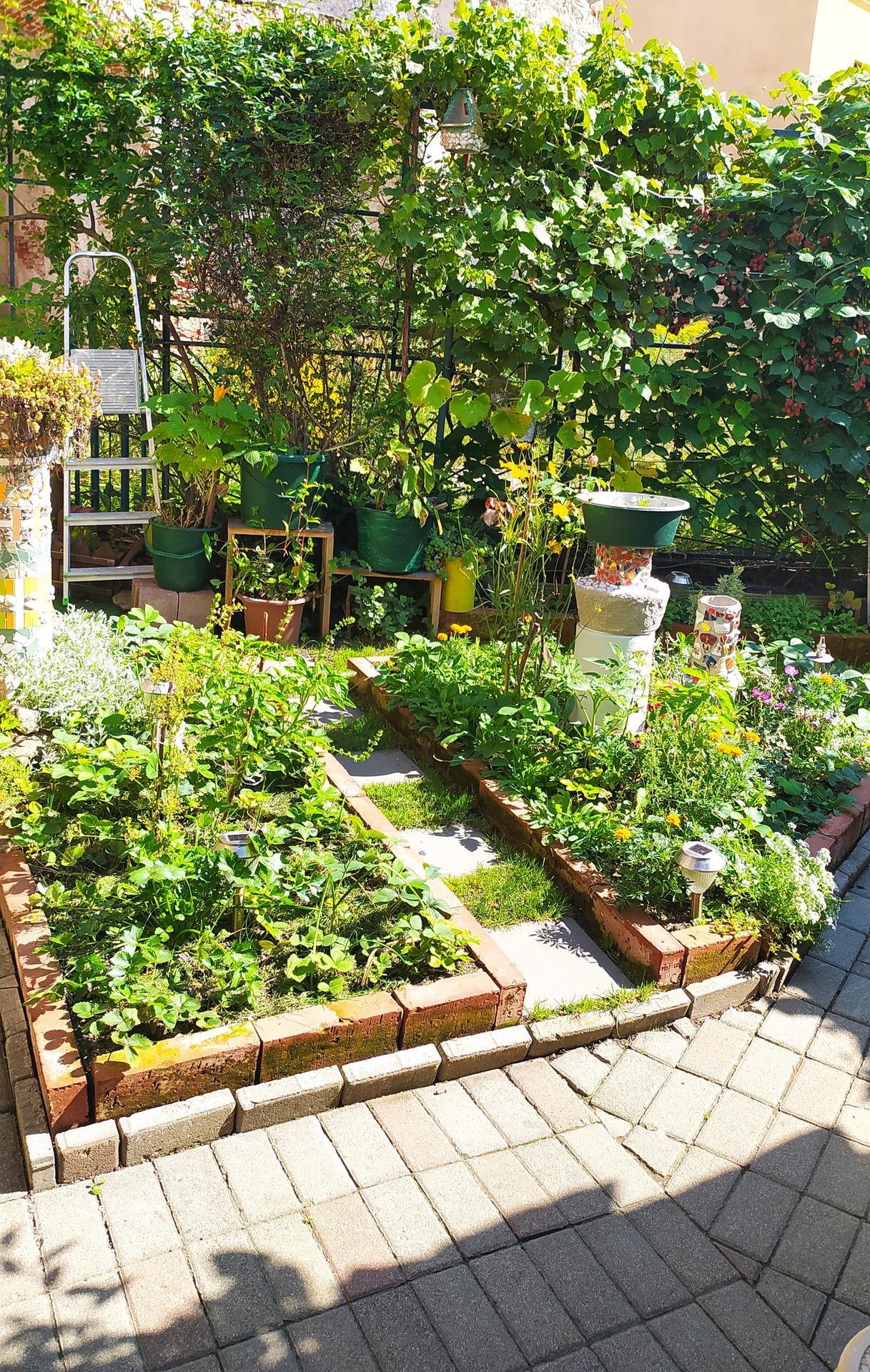 Moja záhradka,moja radosť,relax. - Obrázok č. 6