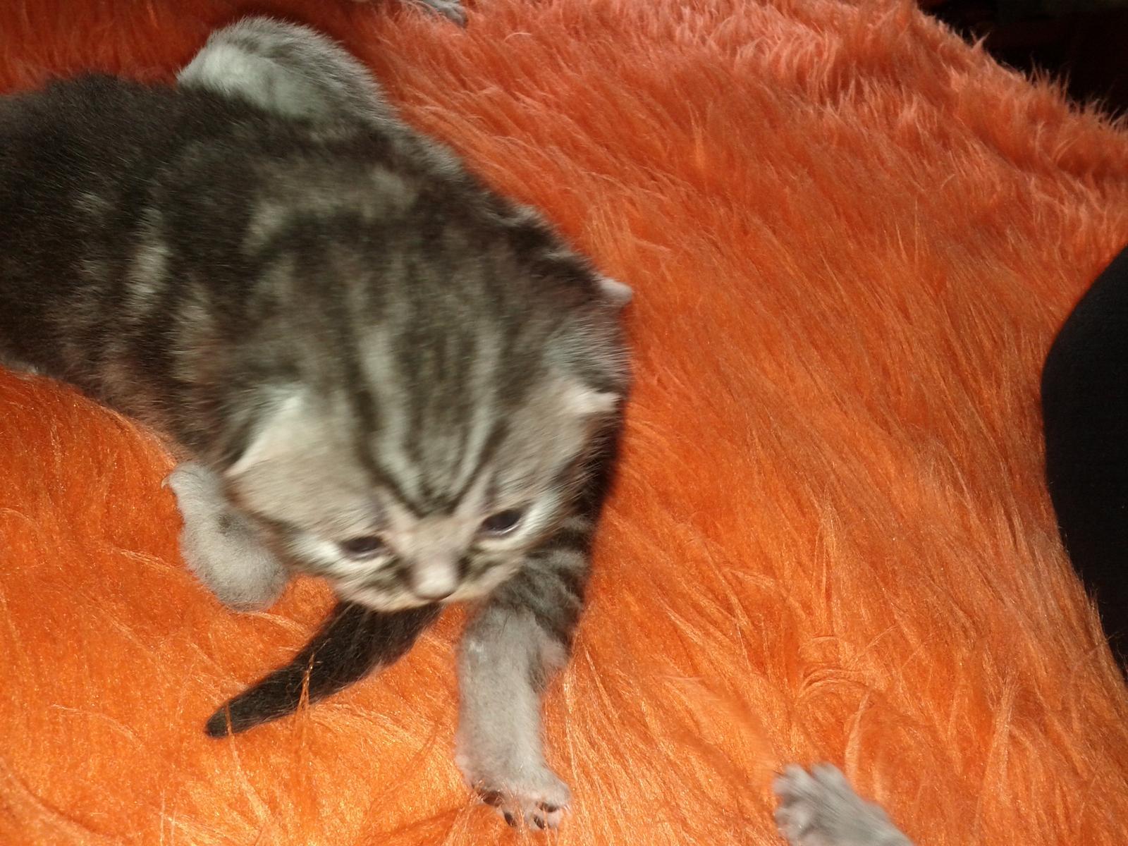 Kočičáci - Obrázek č. 9