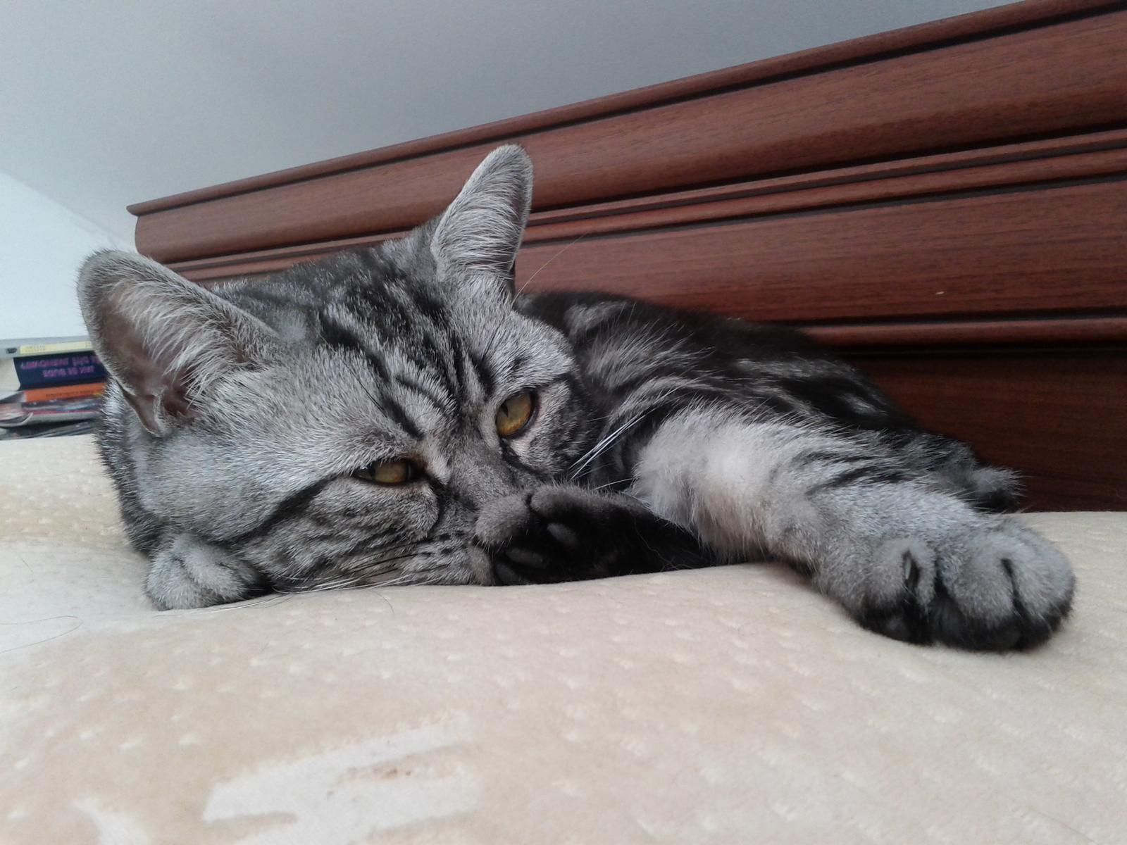 Kočičáci - Obrázek č. 10