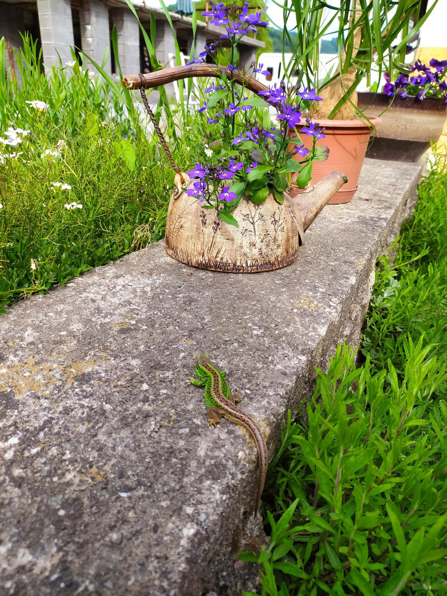 Jarně letní zahrada