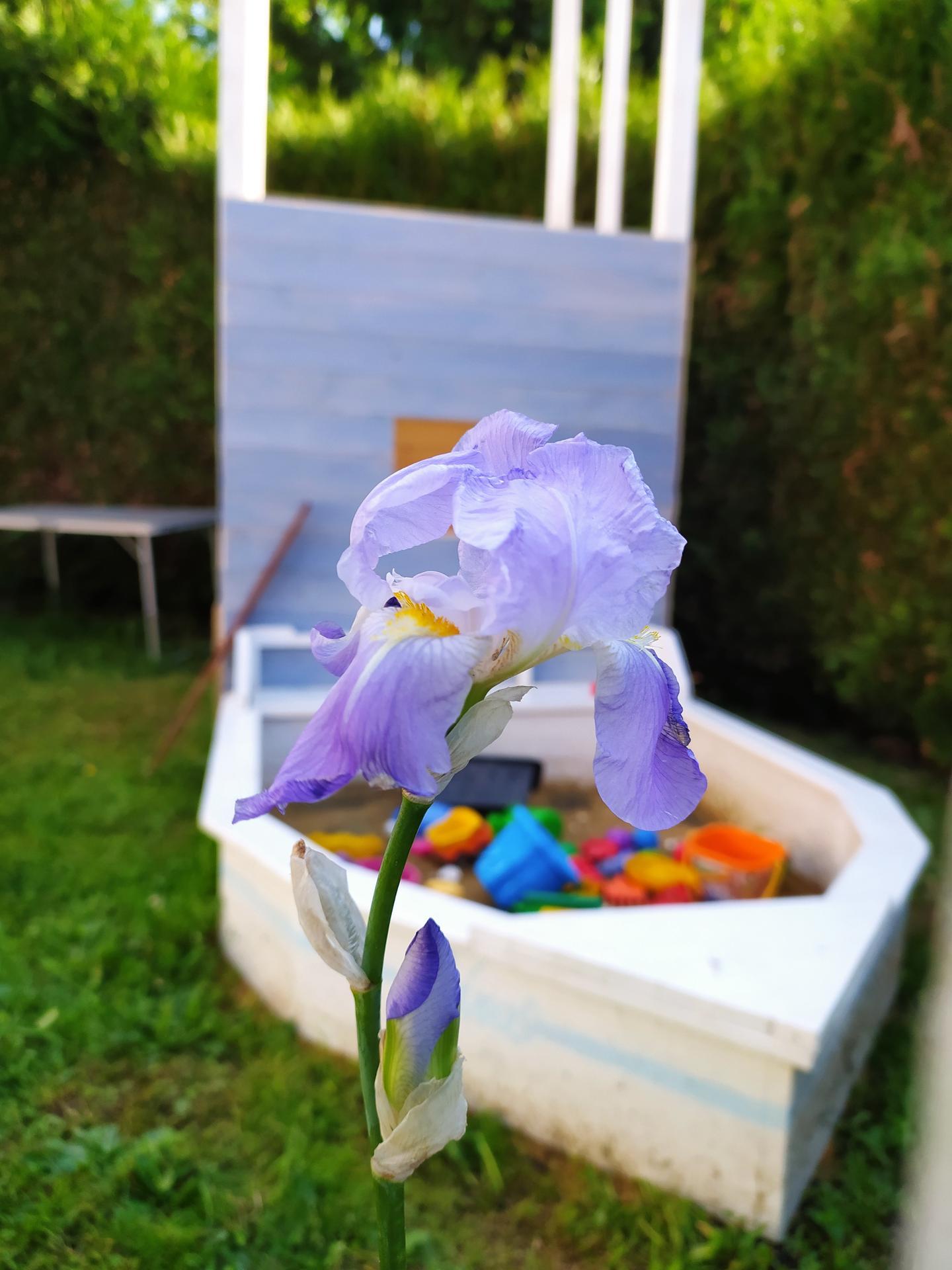 Jarně letní zahrada - Obrázek č. 13