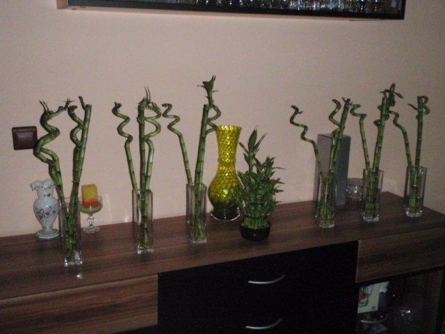 Čo sa nám páči/čo bude - kúpené vázy s bambusmi do sály