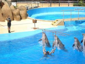 Výlet na delfíny, byla zde i mini zoo a také tobogány