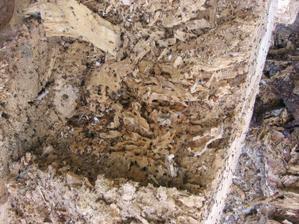 tak z mravenečkú už sú bezdomovci