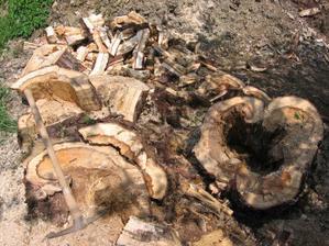 po nasekání z toho byl metr dřeva (a to jsem ještě celý přívesný vozík zgrnělého dřeva odvezl do městské kotelny, kde jej promění na štěpku)