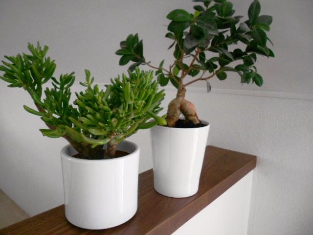 Nepoužité keramické biele črepníky na kvety - Obrázok č. 1