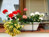 Bielučke samozavlažovacie kvetináče-hrantíky13 ks,
