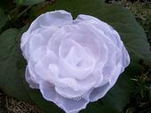 Sněhově bílá růže do vlasů - barva na přání,