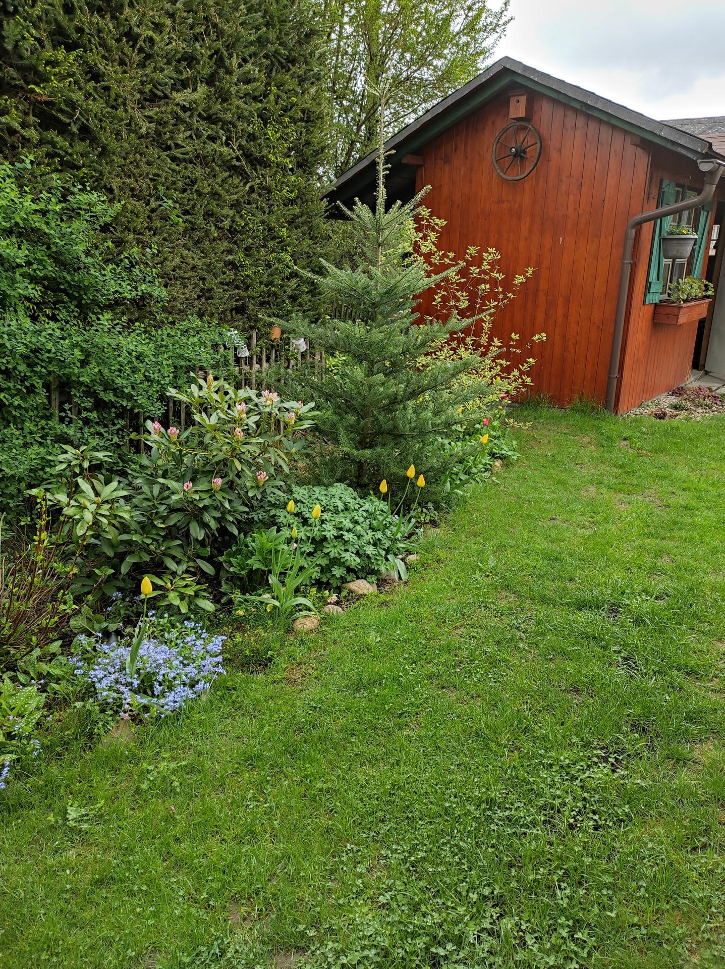 Zahrada 2021 - Obrázek č. 7