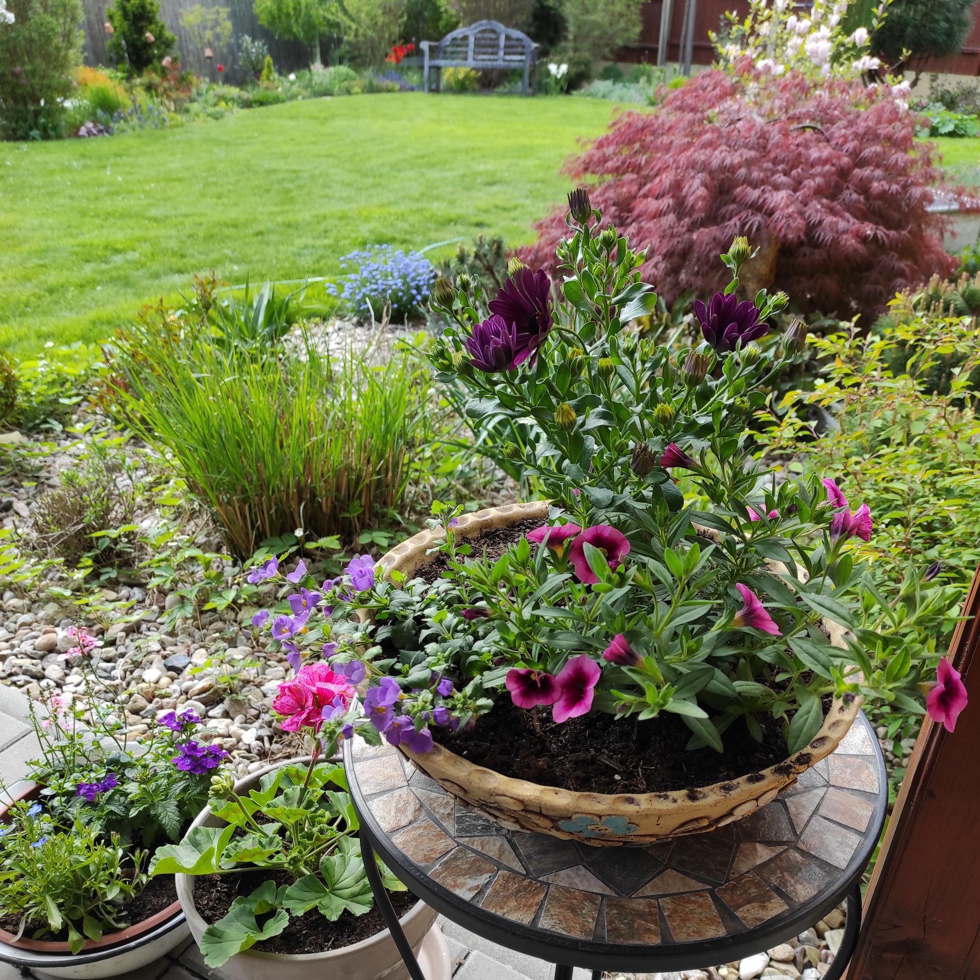 Zahrada 2021 - Obrázek č. 20