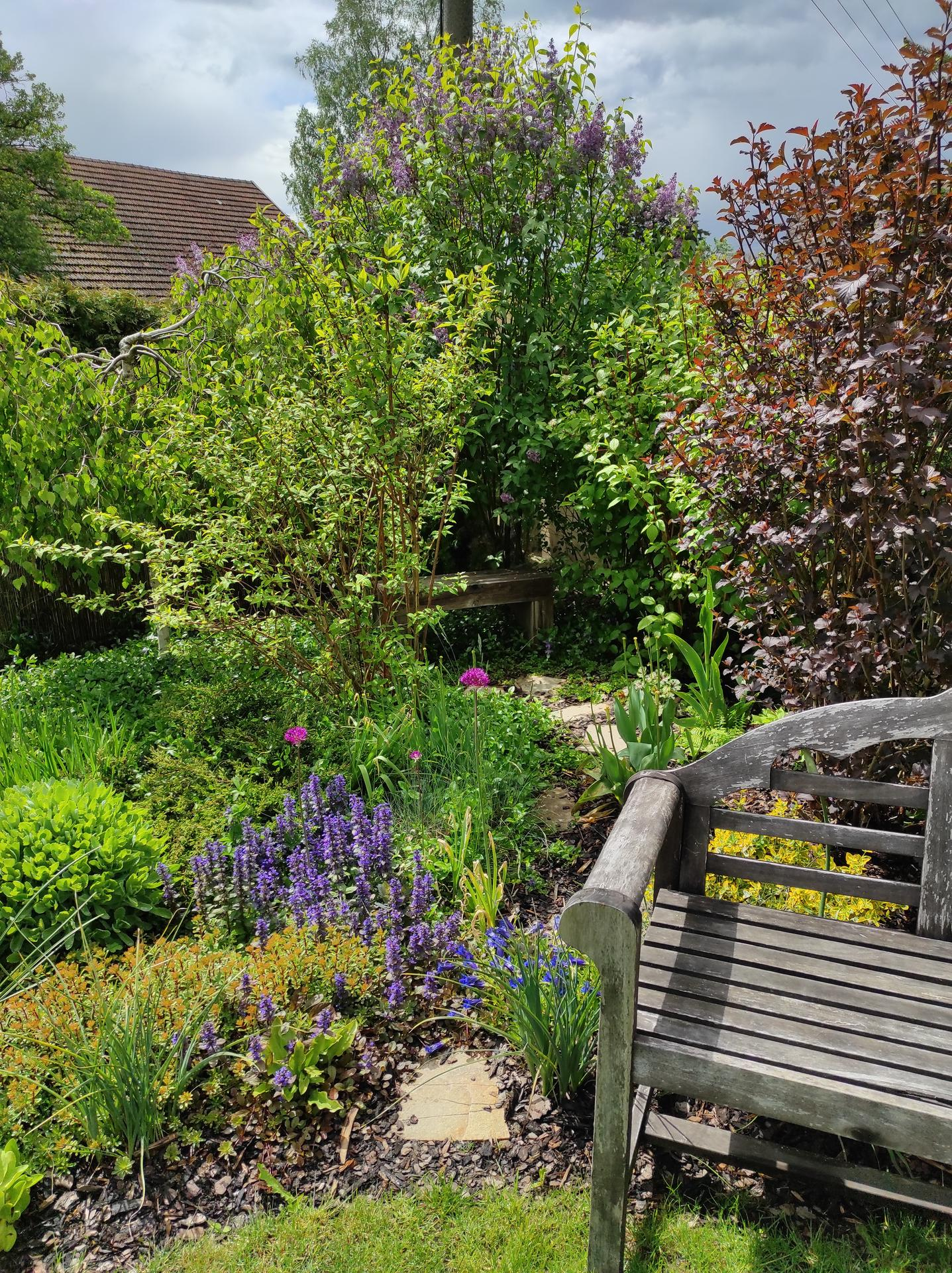 Zahrada 2021 - Obrázek č. 22