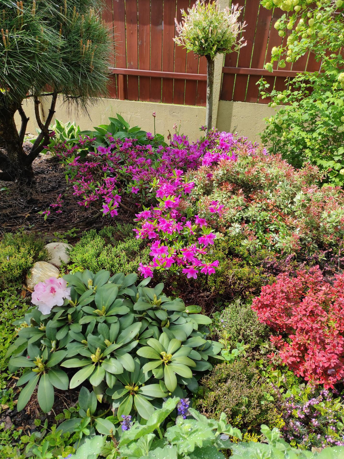 Zahrada 2021 - Obrázek č. 23