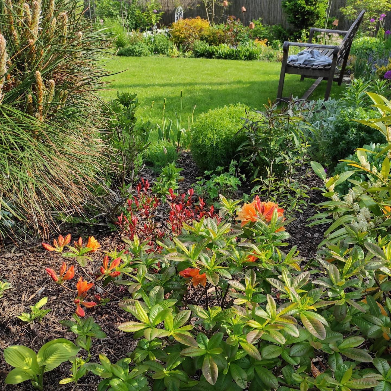 Zahrada 2021 - Obrázek č. 27