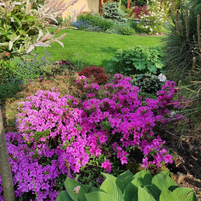 Zahrada 2021 - Obrázek č. 28