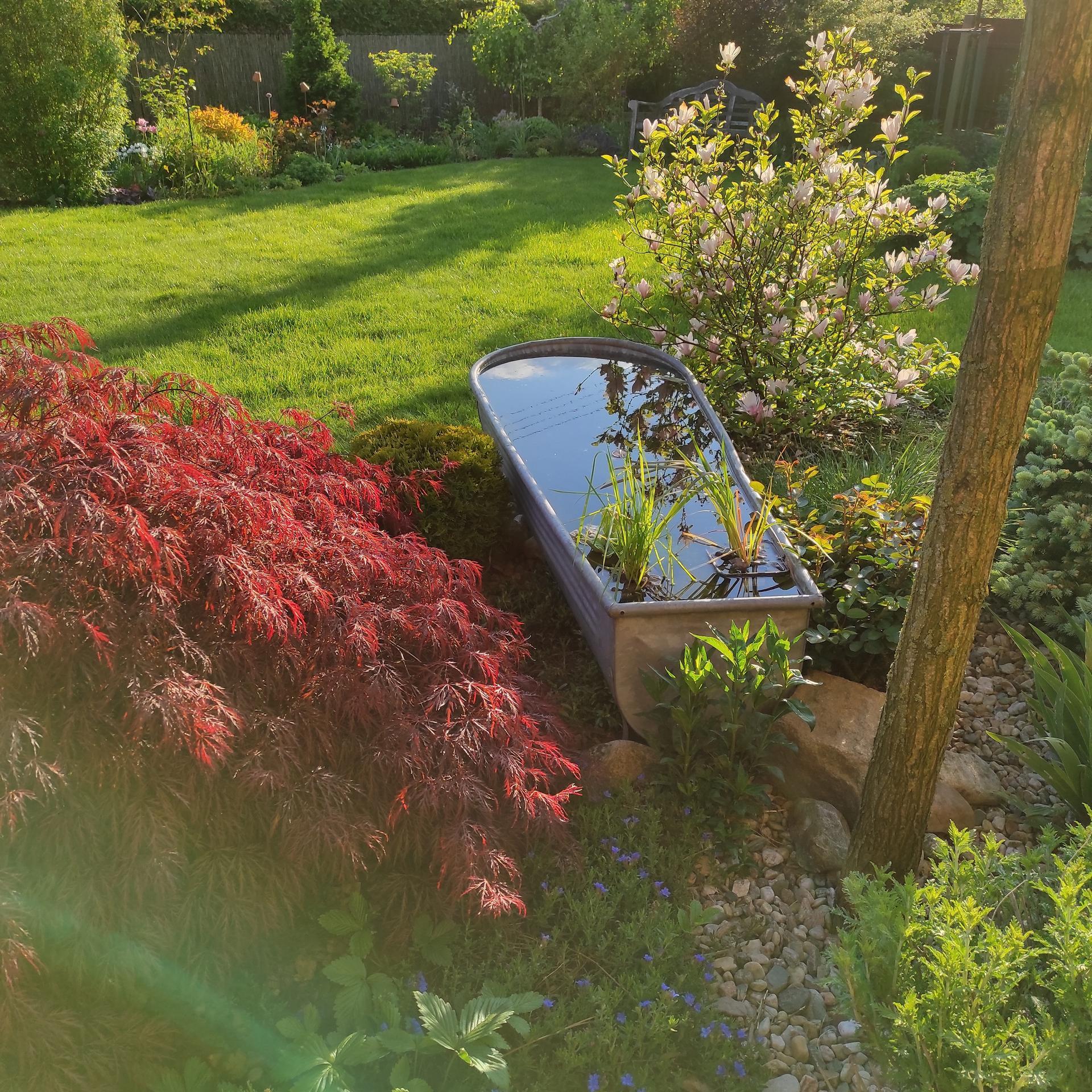 Zahrada 2021 - Obrázek č. 34