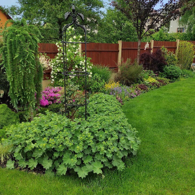 Zahrada 2021 - Obrázek č. 35