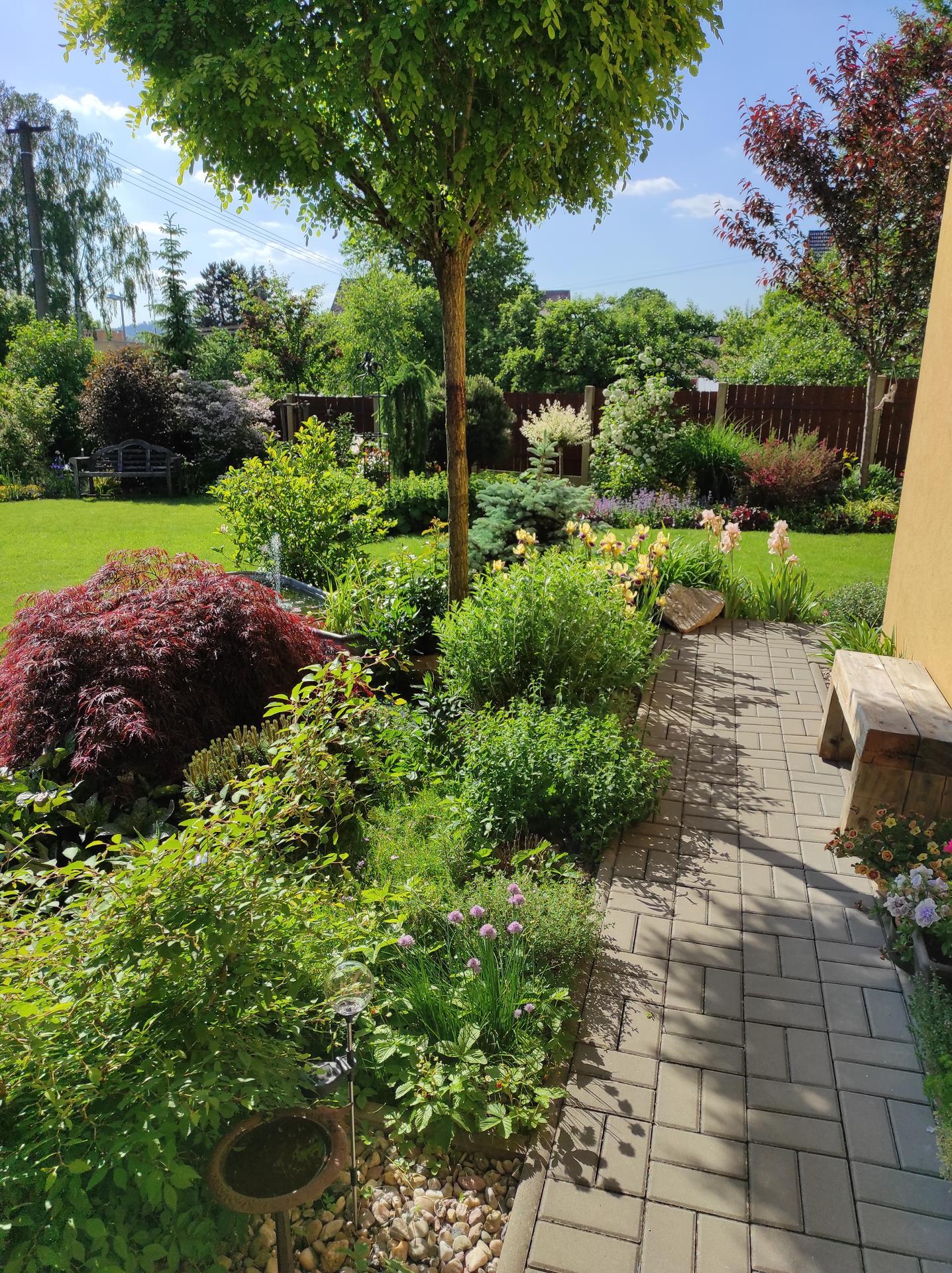Zahrada 2021 - Obrázek č. 42