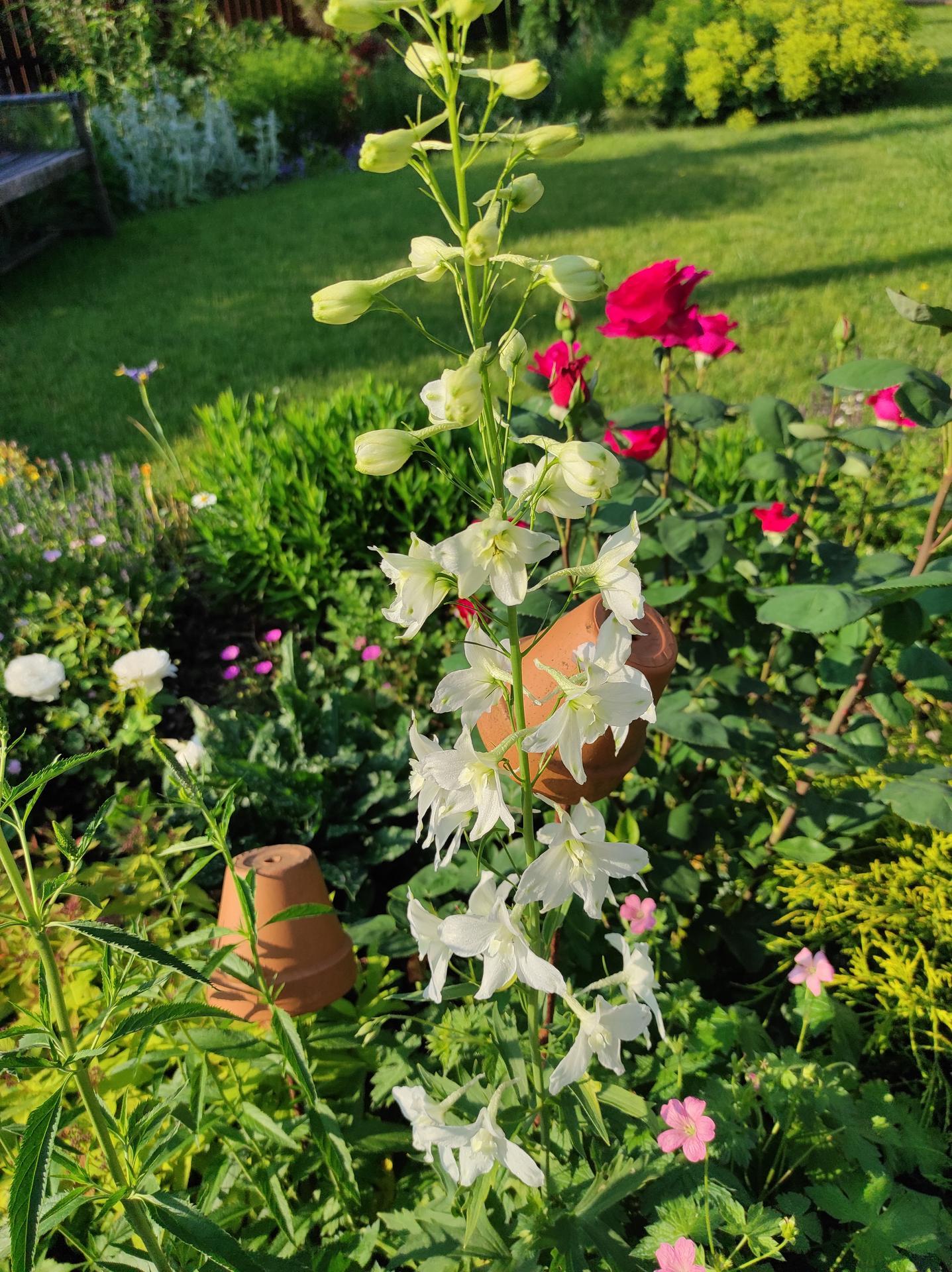 Zahrada 2021 - Obrázek č. 45