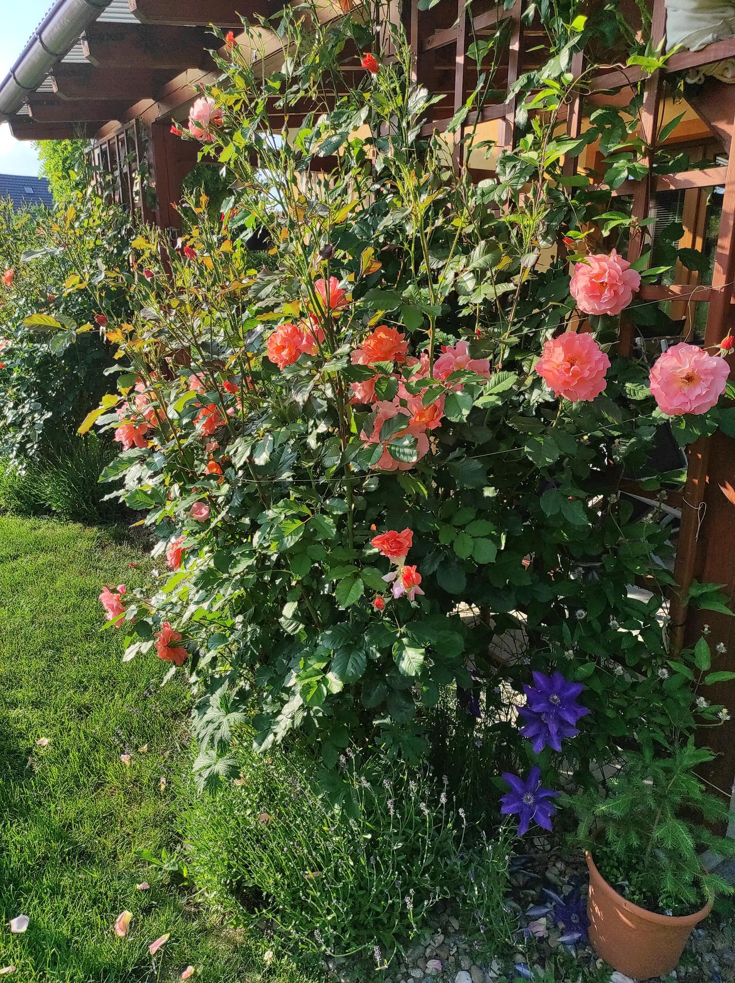 Zahrada 2021 - Obrázek č. 44