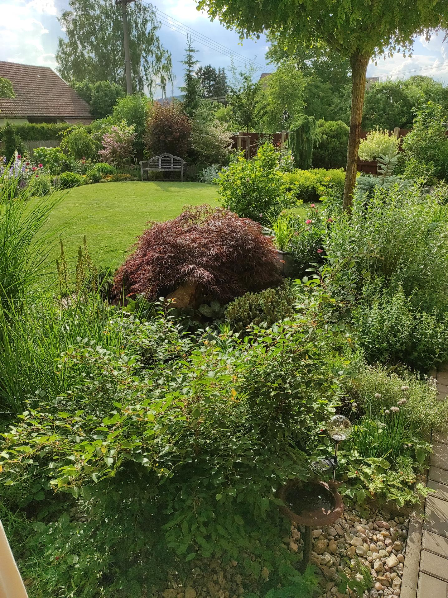 Zahrada 2021 - Obrázek č. 52
