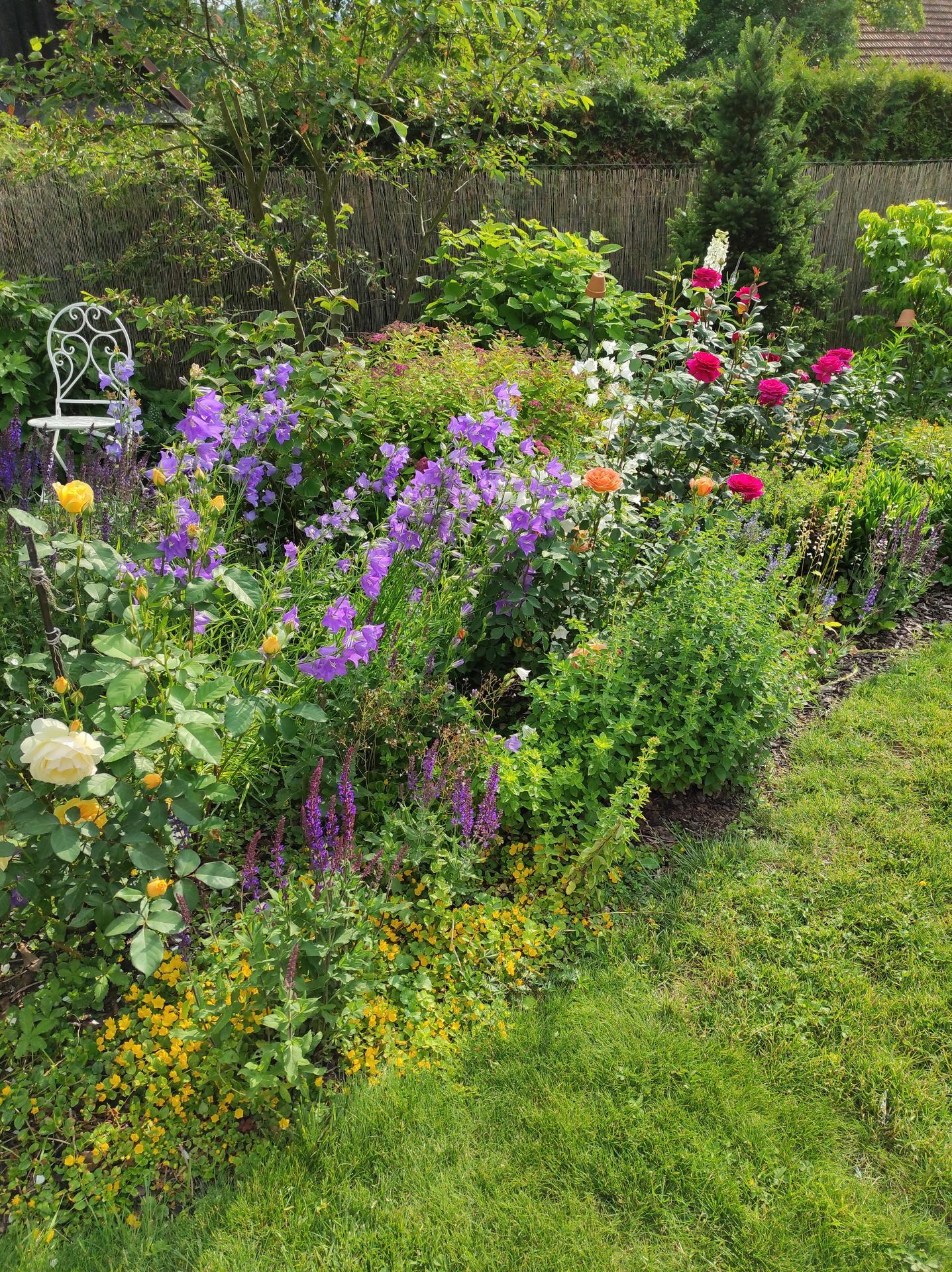 Zahrada 2021 - Obrázek č. 51