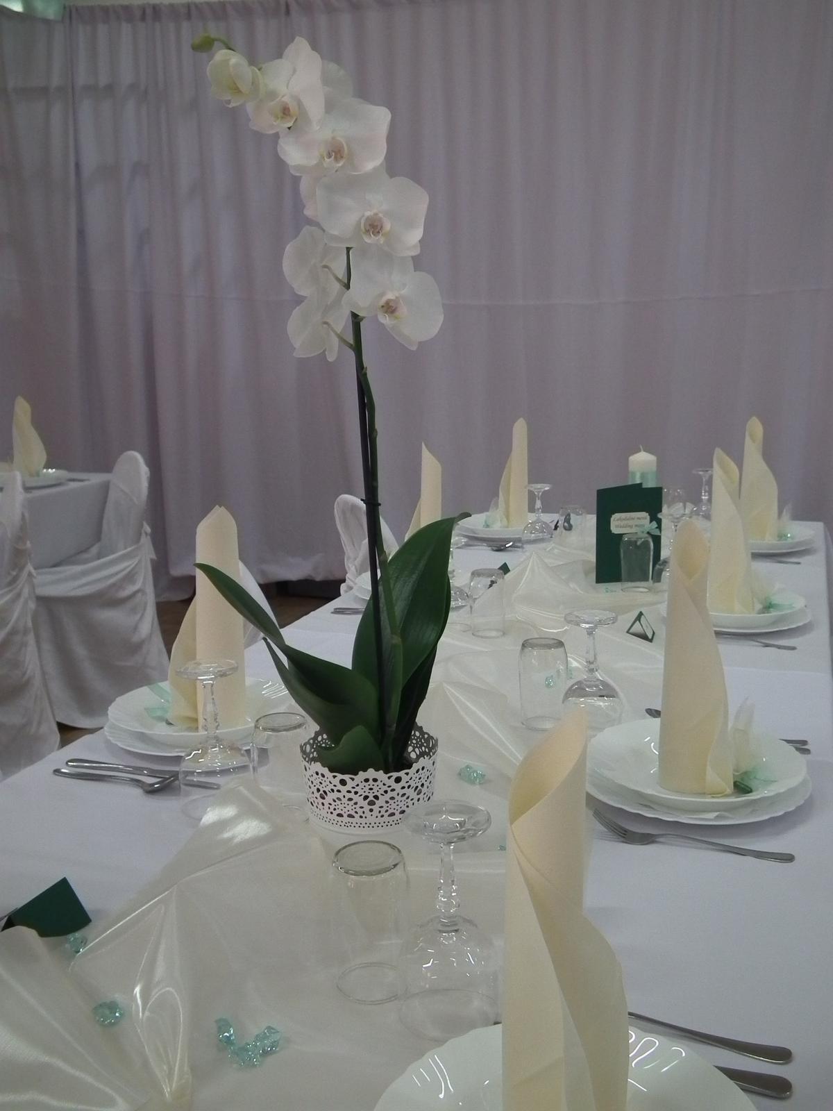 kamarátka mala biele orchideie... - Obrázok č. 1