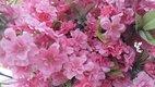 Sakura umele kvety,
