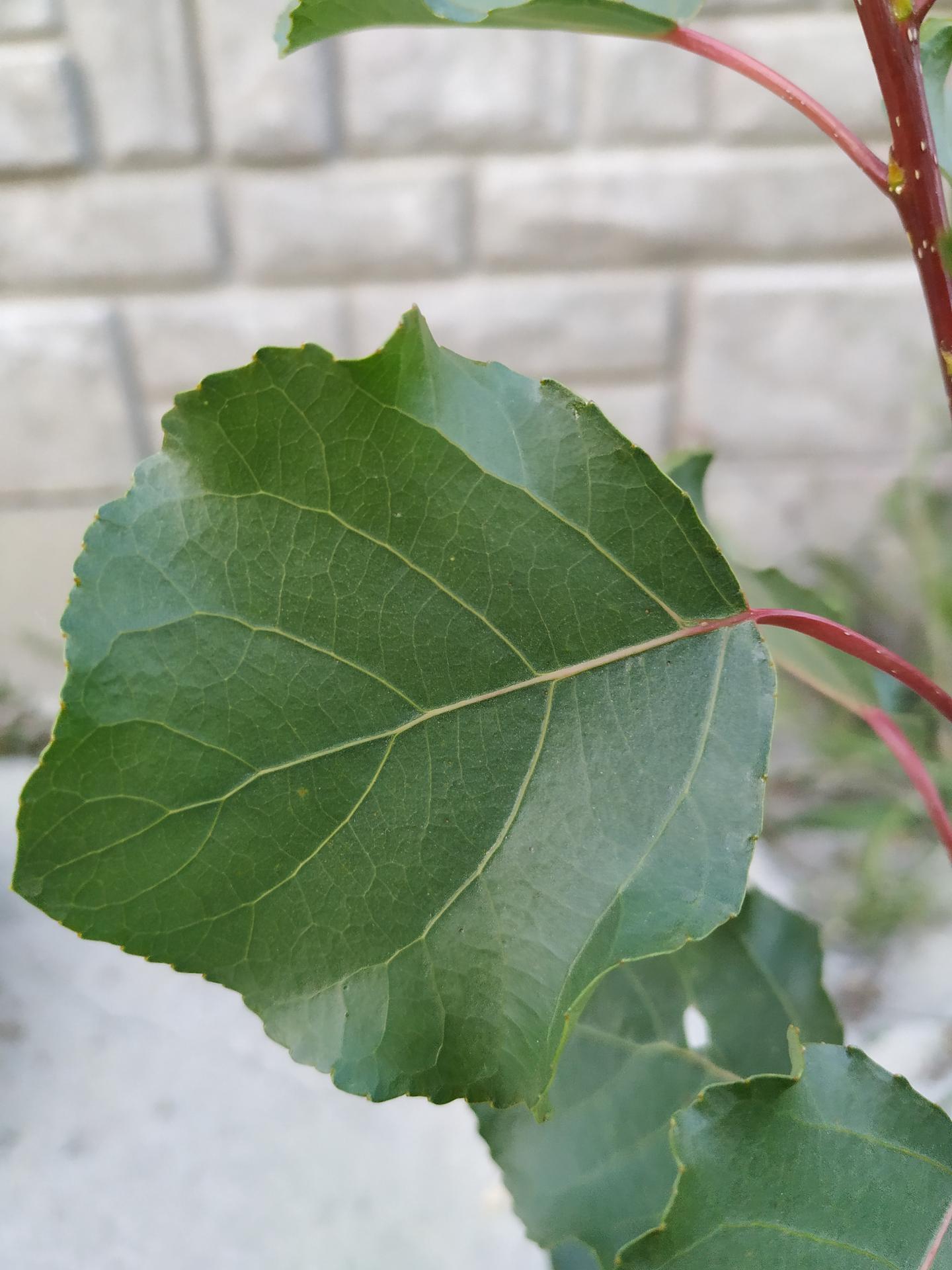 Poradíte, aký stromček nám... - Obrázok č. 1