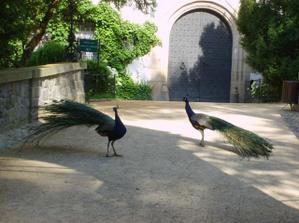 brána u které bych chtěla mít novomanželskou fotku