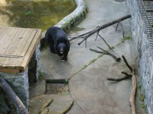 místní medvěd