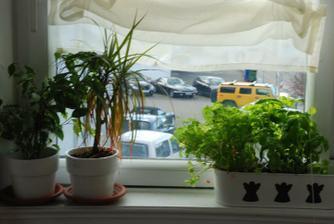 Kvetinace IKEA po 15ti centech + akrylova barva, bylinky v plechu. Mazle, sorac :)