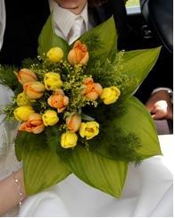 """Tulipápy, tulipány a zase jen tulipány, - vypůjčeno z alba """"kamiami"""", děkuji"""