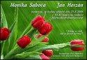 Tulipápy, tulipány a zase jen tulipány - podruhé - Obrázek č. 3