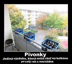 tento rok si na balkone zasadim pivonky