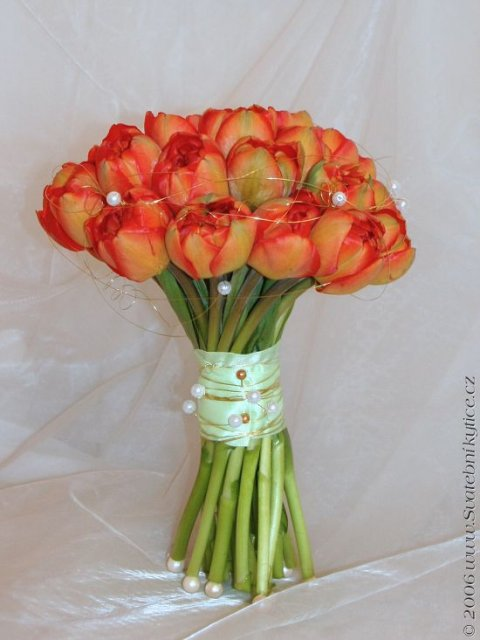 Přípravy - tulipány po 50 :-)