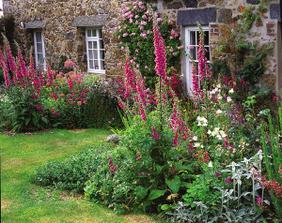 digitalis,alebo náprstník je nádherný vysoký kvet krášliaci naše záhrady